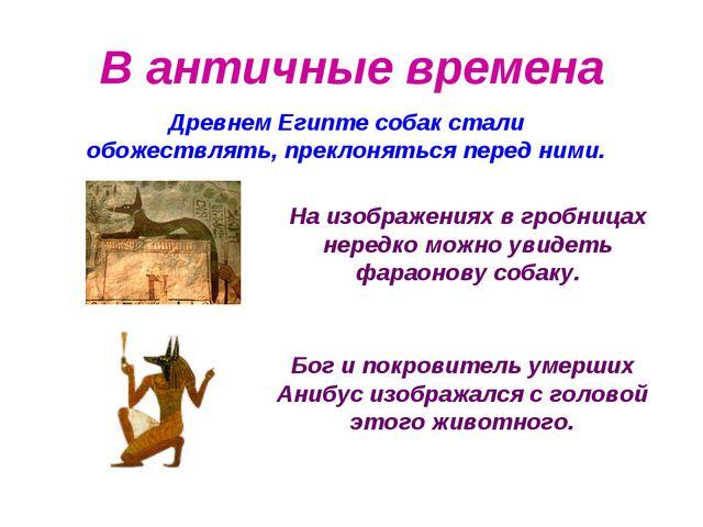 Бог и покровитель умерших Анибус изображался с головой этого животного. В ант...