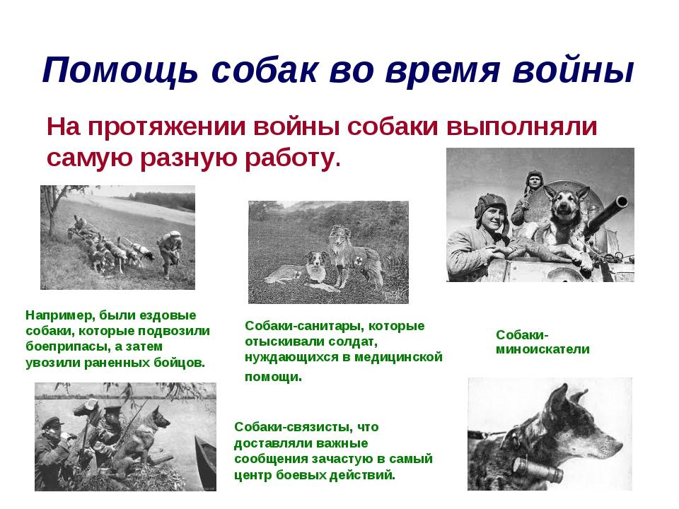 Помощь собак во время войны На протяжении войны собаки выполняли самую разную...