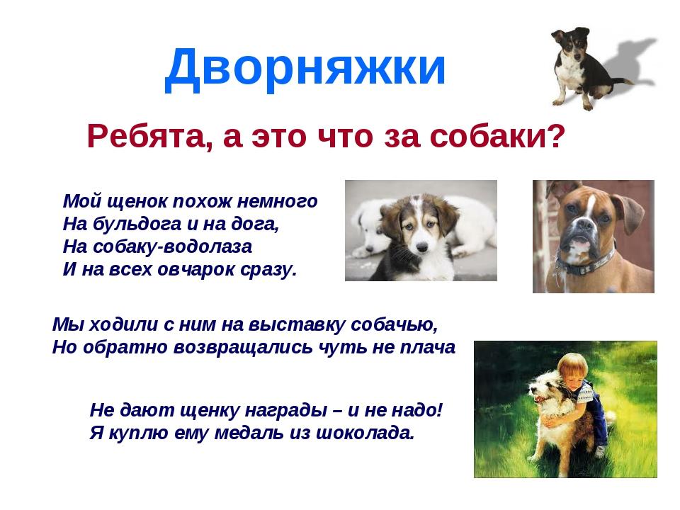Дворняжки Ребята, а это что за собаки? Мой щенок похож немного На бульдога и...
