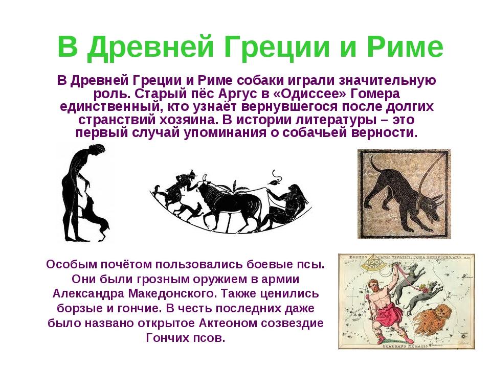 В Древней Греции и Риме В Древней Греции и Риме собаки играли значительную ро...