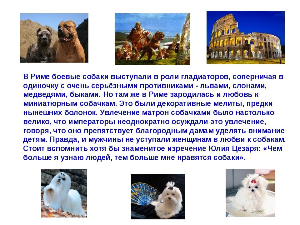 В Риме боевые собаки выступали в роли гладиаторов, соперничая в одиночку с оч...
