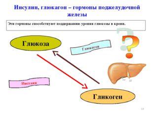 Инсулин Глюкагон Инсулин, глюкагон – гормоны поджелудочной железы Эти гормоны