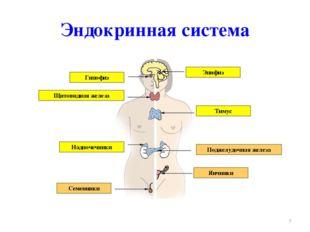 Эндокринная система * Гипофиз Щитовидная железа Тимус Эпифиз Надпочечники Сем