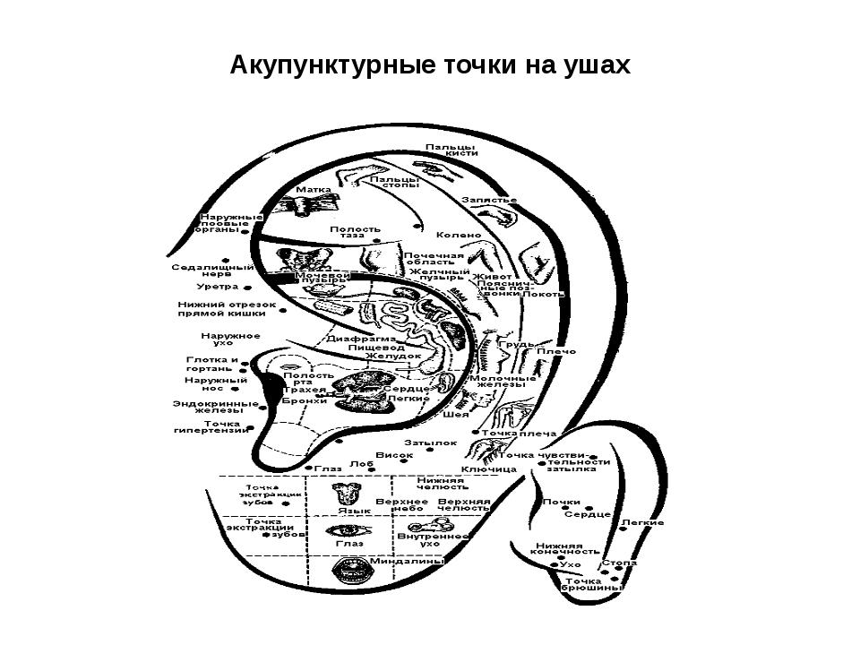 Акупунктурные точки на ушах