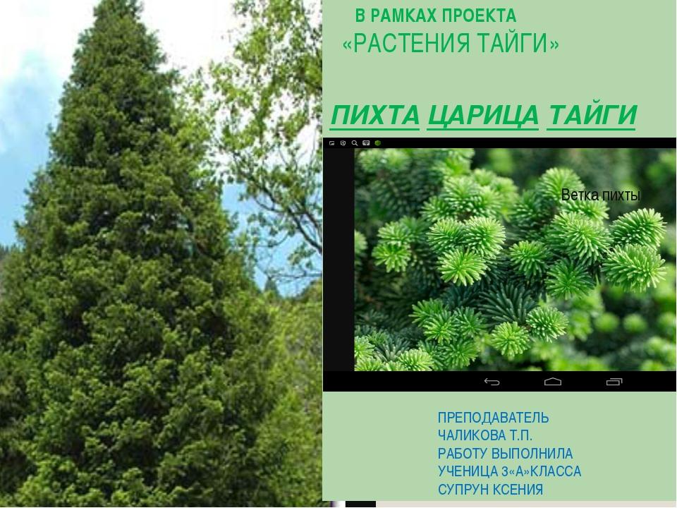 Какие растения растут в тайге фото