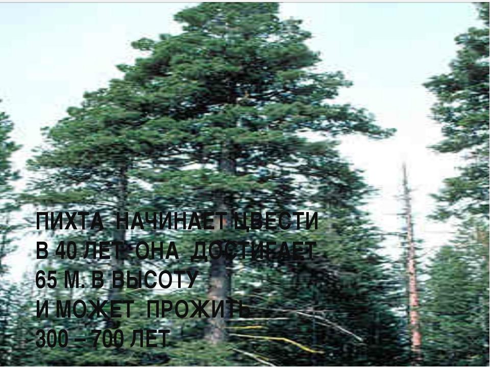 ПИХТА НАЧИНАЕТ ЦВЕСТИ В 40 ЛЕТ ОНА ДОСТИГАЕТ 65 М. В ВЫСОТУ И МОЖЕТ ПРОЖИТЬ...