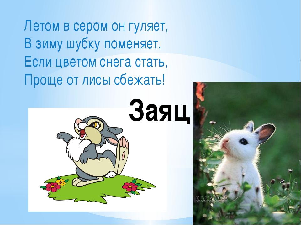 Летом в сером он гуляет, В зиму шубку поменяет. Если цветом снега стать, Прощ...