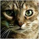 C:\Documents and Settings\Татьяна Степановна\Рабочий стол\проект кошки\фото2\Рисунок10.jpg