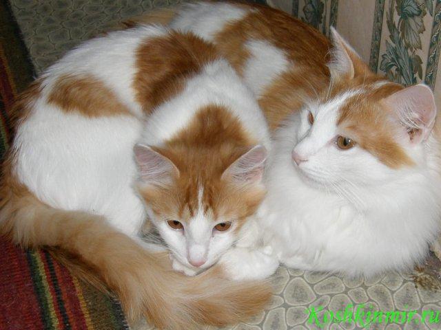 G:\проект кошки\фото кошек\к10.jpg