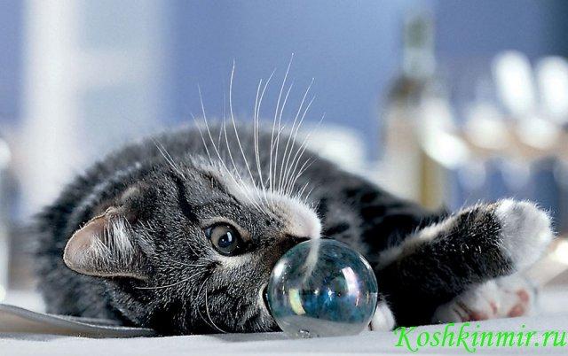 G:\проект кошки\фото кошек\к5.jpg