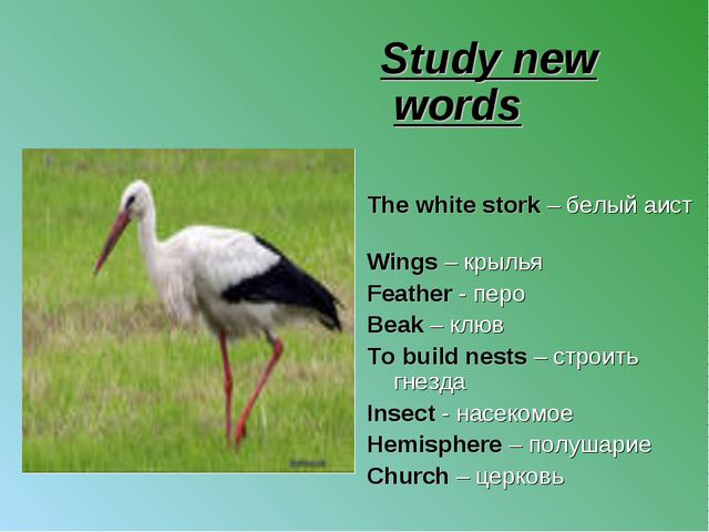 Study new words The white stork – белый аист Wings – крылья Feather - перо B...