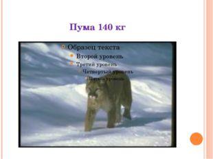 Пума 140 кг