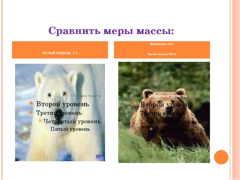 Сравнить меры массы: Белый медведь 1 т Бурый медведь 750 кг Бурый медведь 750...