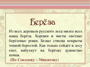 Из всех деревьев русского леса милее всех наша берёза. Хороши и чисты светлые