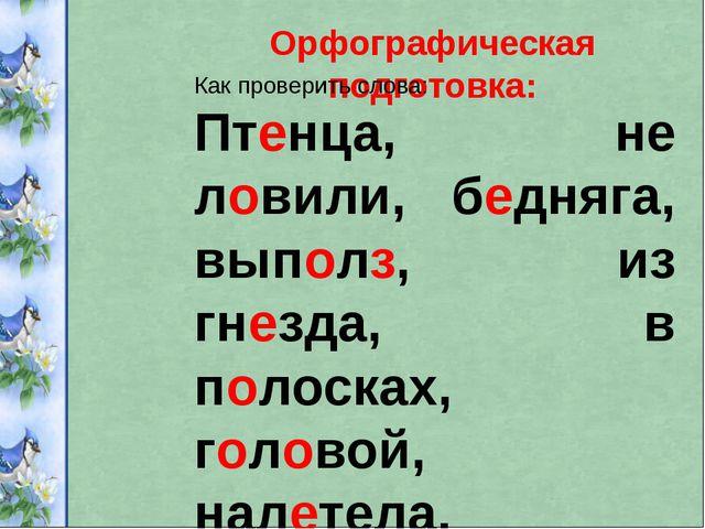 Орфографическая подготовка: Как проверить слова: Птенца, не ловили, бедняга,...