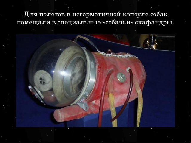 Для полетов в негерметичной капсуле собак помещали в специальные «собачьи» ск...