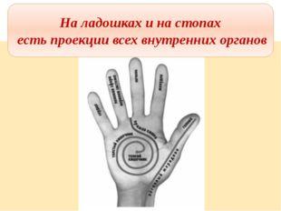 На ладошках и на стопах есть проекции всех внутренних органов На ладошках и н