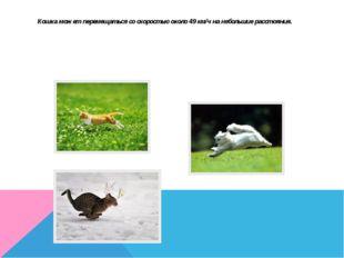 Кошка может перемещаться со скоростью около 49 км/ч на небольшие расстояния.