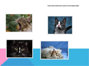 Кошки обычно имеет около 12 усов на каждой стороне морды.