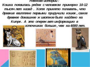 Немного истории : Кошка появилась рядом с человеком примерно 10-12 тысяч лет