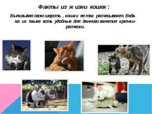 Факты из жизни кошек : Вылизывая свою шерсть , кошки ее так расчесывают. Ведь