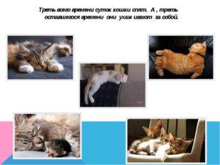 Треть всего времени суток кошки спят. А , треть оставшегося времени они ухажи