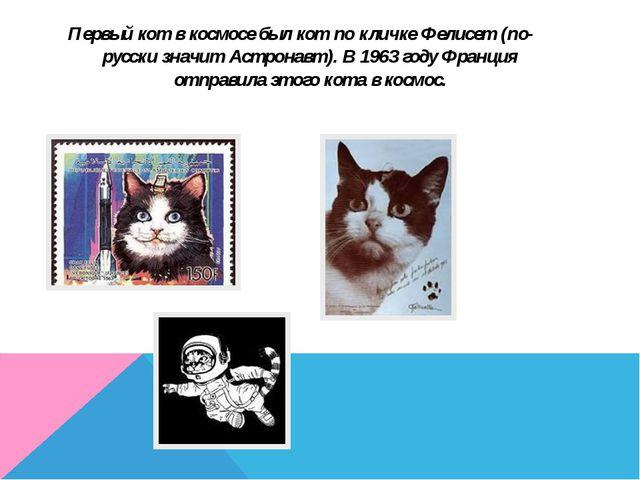 Первый кот в космосе был кот по кличке Фелисет (по-русски значит Астронавт)....