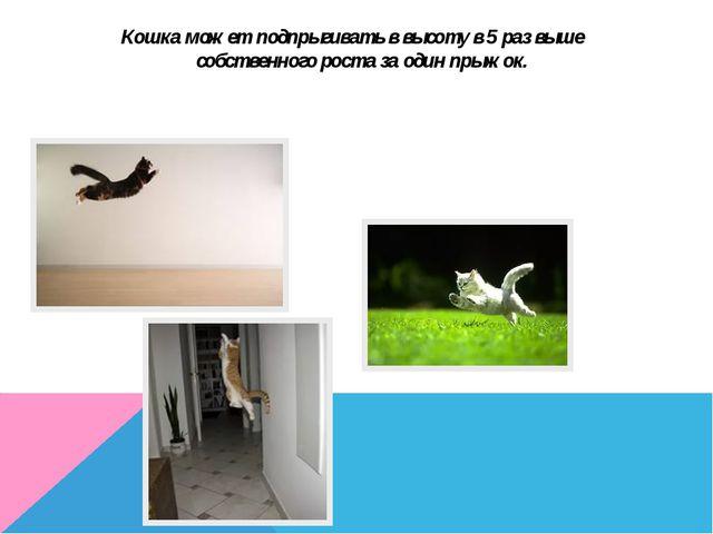 Кошка может подпрыгивать в высоту в 5 раз выше собственного роста за один пры...