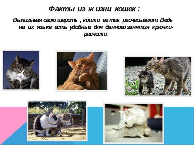 Факты из жизни кошек : Вылизывая свою шерсть , кошки ее так расчесывают. Ведь...