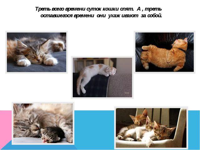 Треть всего времени суток кошки спят. А , треть оставшегося времени они ухажи...