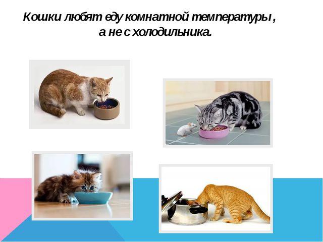 Кошки любят еду комнатной температуры , а не с холодильника.