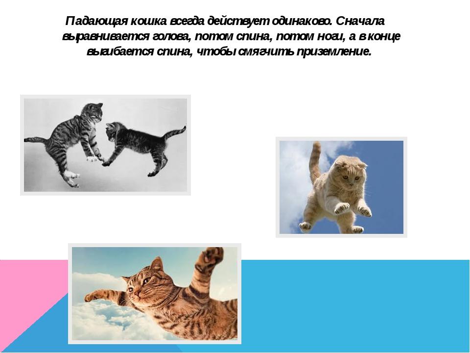 Падающая кошка всегда действует одинаково. Сначала выравнивается голова, пото...