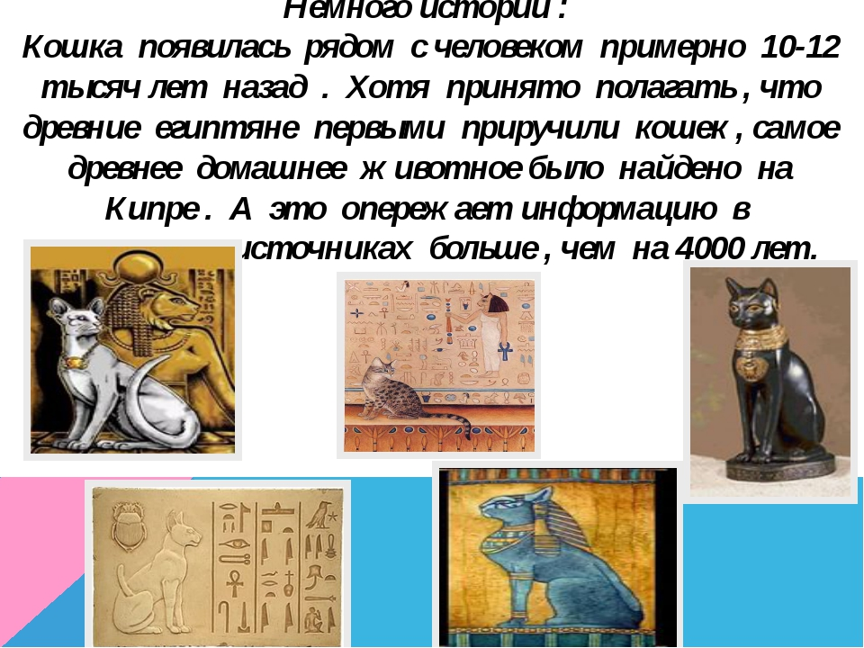Немного истории : Кошка появилась рядом с человеком примерно 10-12 тысяч лет...