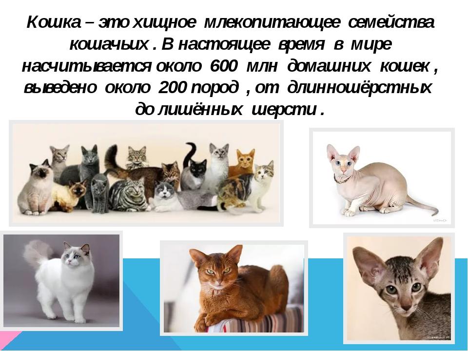 Кошка – это хищное млекопитающее семейства кошачьих . В настоящее время в мир...