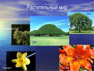 Растительный мир Дуб Вяз Можжевельник Нарцисс Лилия