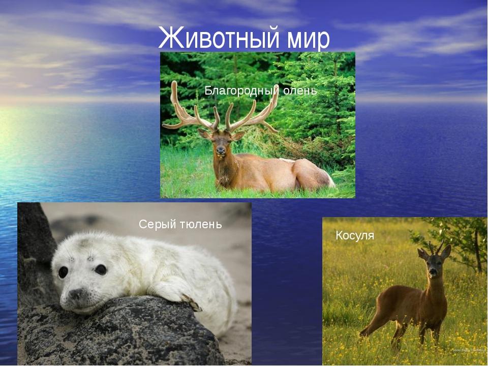 Животный мир Благородный олень Косуля Серый тюлень