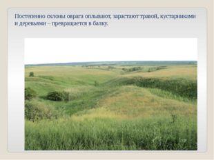 Постепенно склоны оврага оплывают, зарастают травой, кустарниками и деревьями