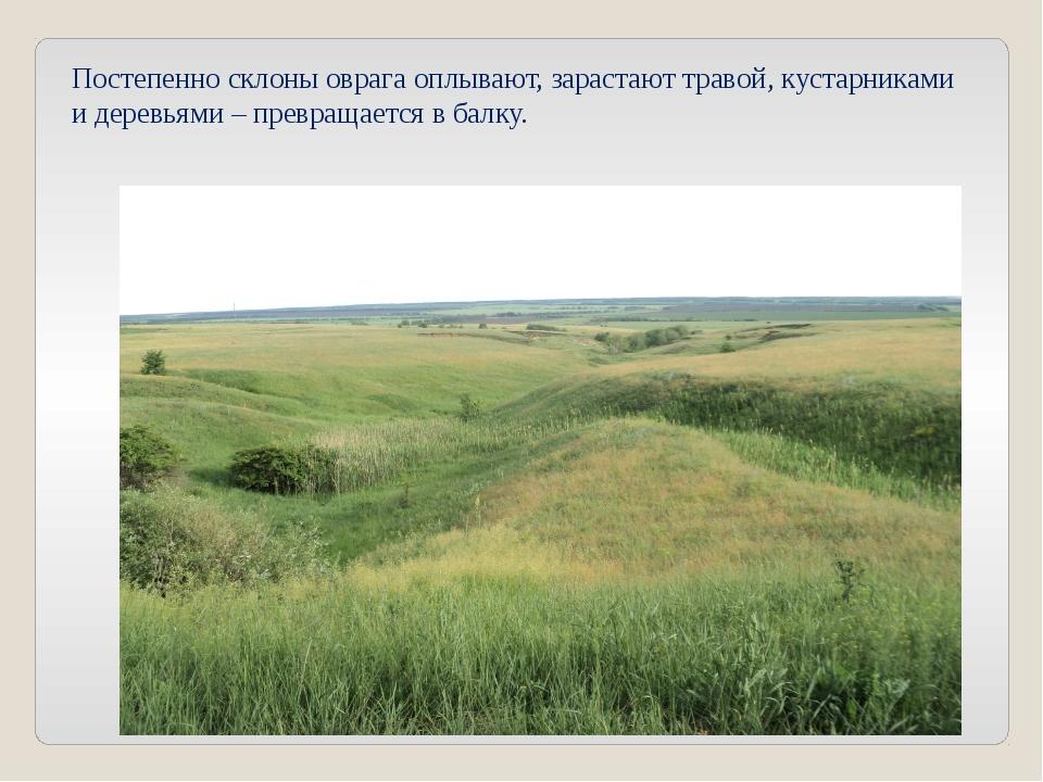 Постепенно склоны оврага оплывают, зарастают травой, кустарниками и деревьями...