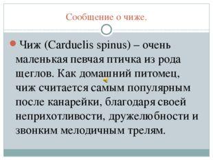 Сообщение о чиже. Чиж (Carduelis spinus) – очень маленькая певчая птичка из р