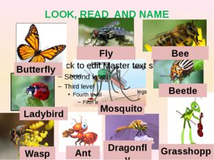 LOOK, READ AND NAME Butterfly Fly Bee Ladybird Beetle Wasp Ant Dragonfly Gras
