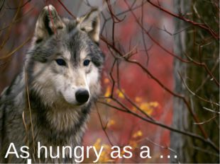 As hungry as a …
