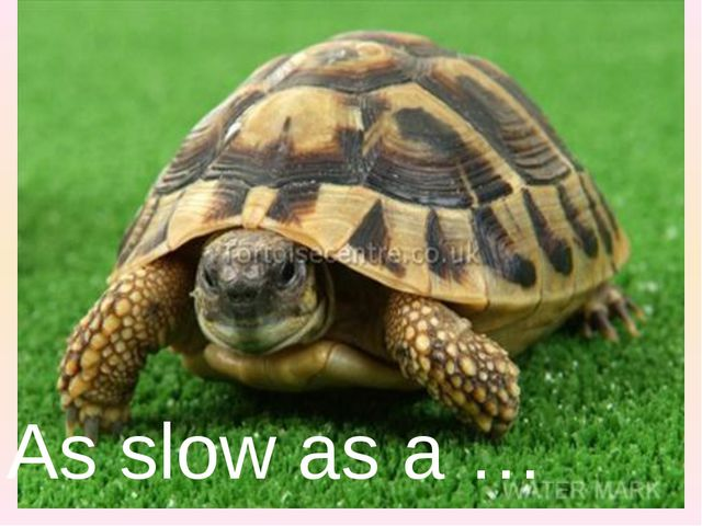 As slow as a …