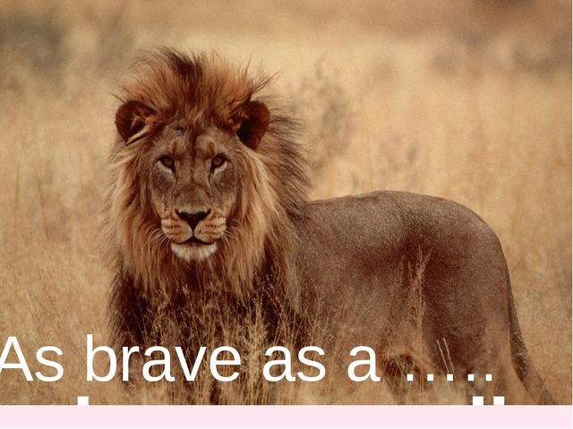 As brave as a …..
