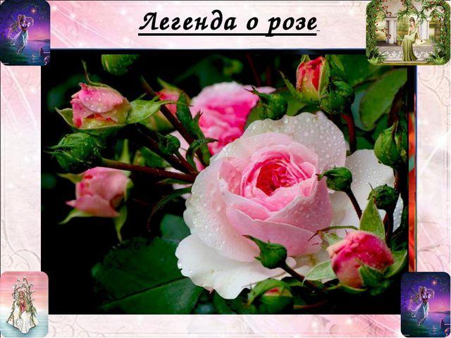 Легенда о розе