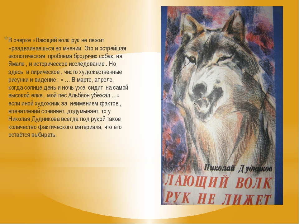 В очерке «Лающий волк рук не лежит »раздваиваешься во мнении. Это и острейшая...