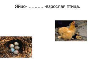 Яйцо- ………. -взрослая птица.