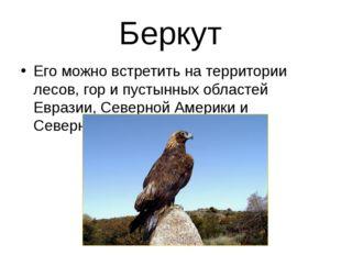 Беркут Его можно встретить на территории лесов, гор и пустынных областей Евра