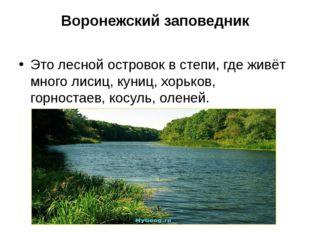 Воронежский заповедник Это лесной островок в степи, где живёт много лисиц, ку