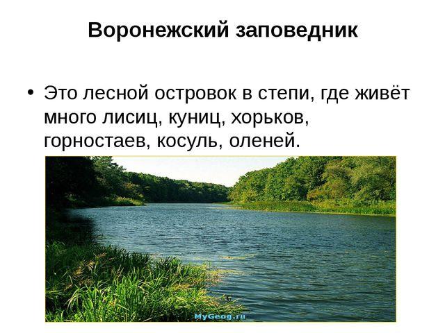 Воронежский заповедник Это лесной островок в степи, где живёт много лисиц, ку...