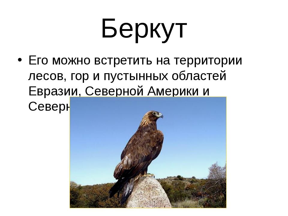 Беркут Его можно встретить на территории лесов, гор и пустынных областей Евра...